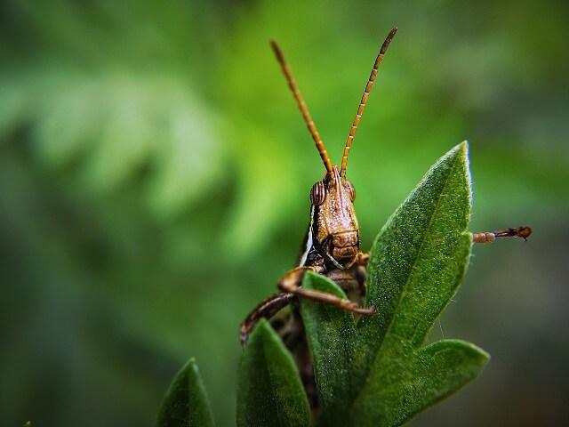 吃蟲可以補充蛋白質