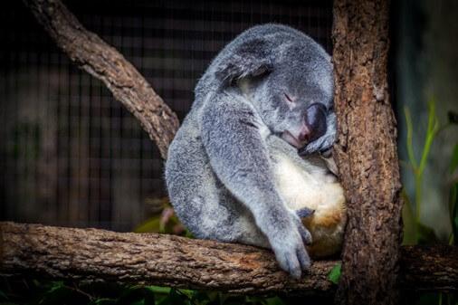 睡眠會影響瘦身成果